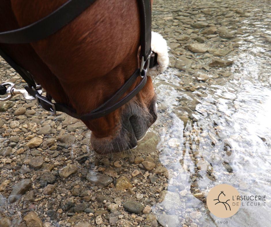 cheval qui boit dans un ruisseau