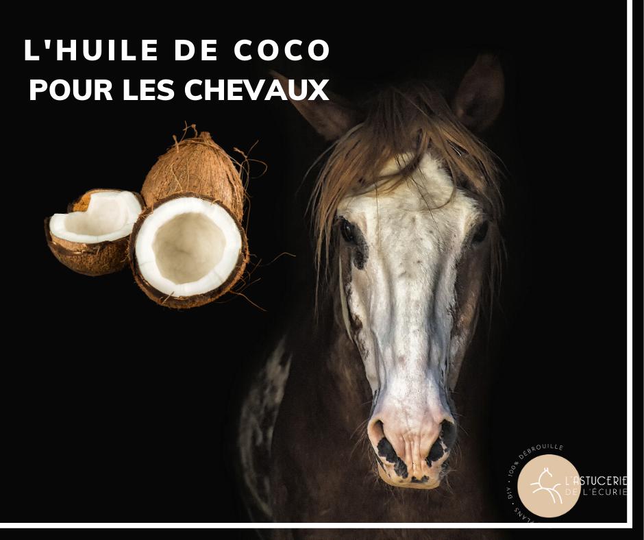 Huile de Coco : Les 15 meilleures utilisations pour Votre Cheval.