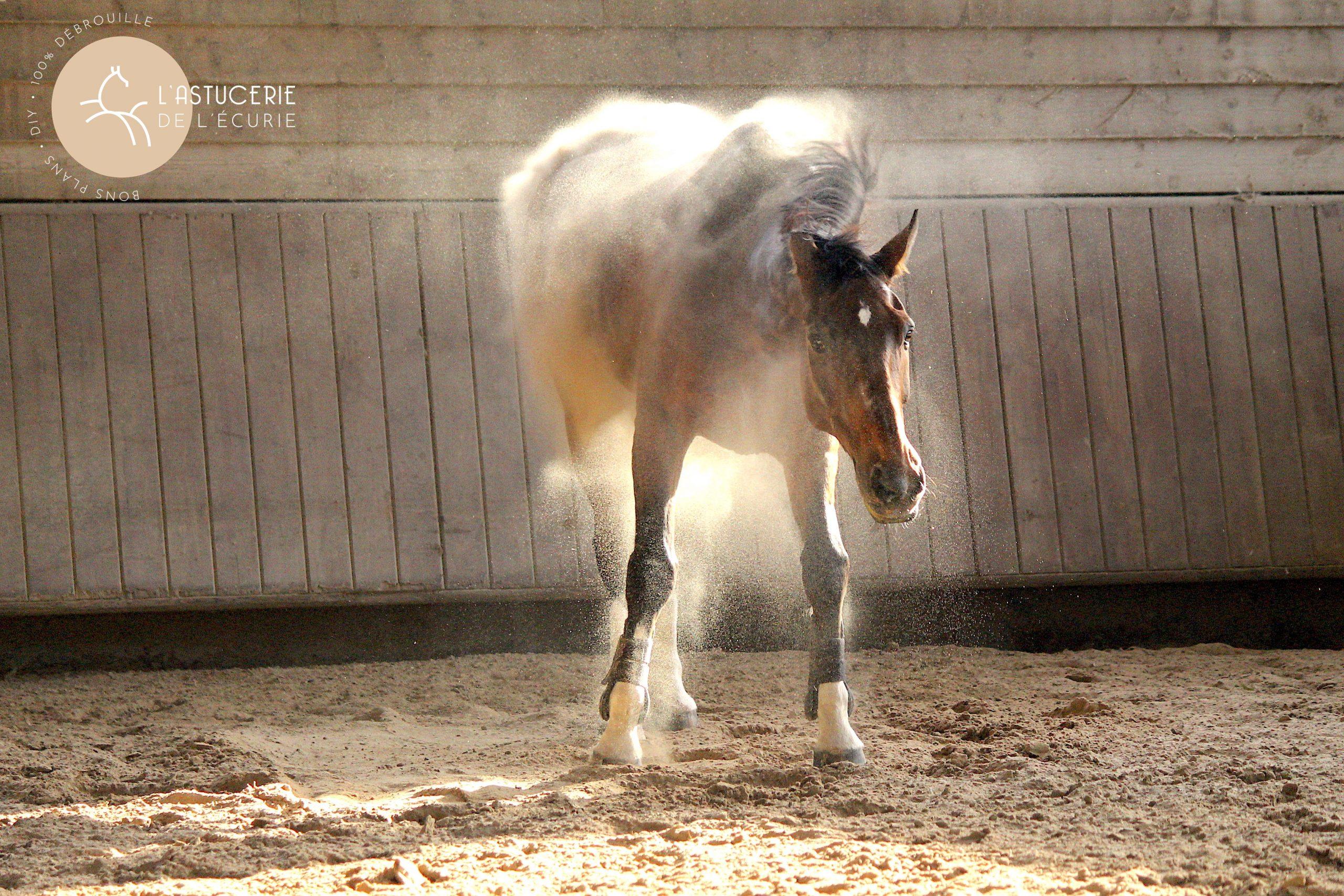 cheval qui se secoue plein de poussière