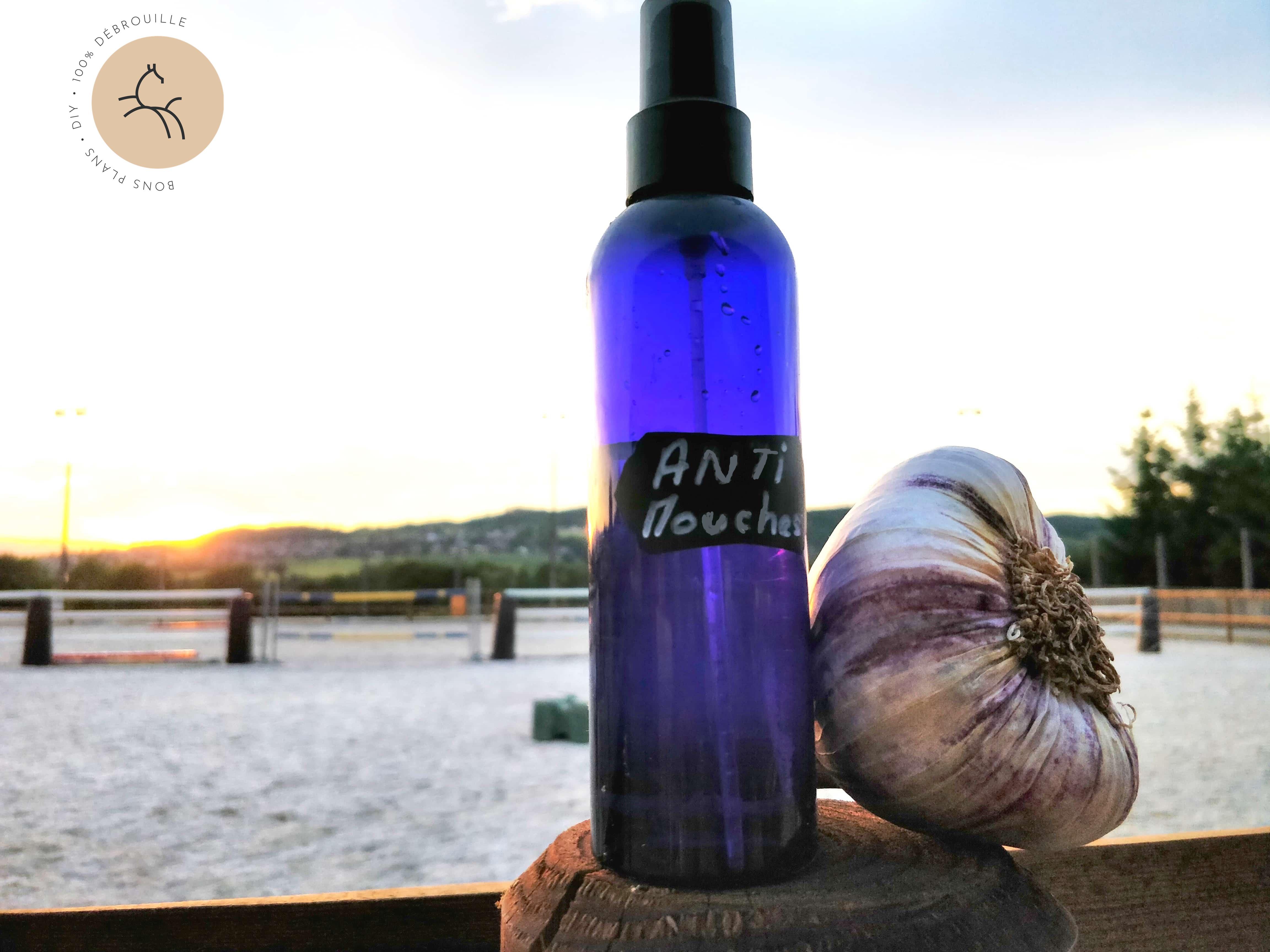 Spray Anti-Mouches : La 1ère Recette DIY Naturelle pour les Chevaux (sans huiles essentielles)