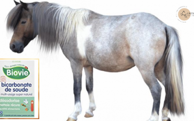 15 Utilisations du Bicarbonate pour le Cheval et le Cavalier