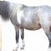 Comment utiliser le bicarbonate de soude pour les chevaux