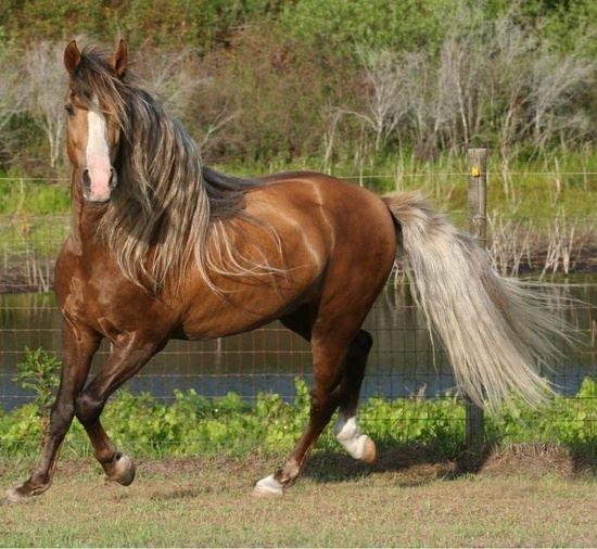 soins, astuces et entretien des crins et crinière du cheval pour les crins fins et la repousse