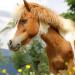 Faire ses produits naturels pour le cheval