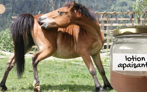 lotion apaisante dermite cheval