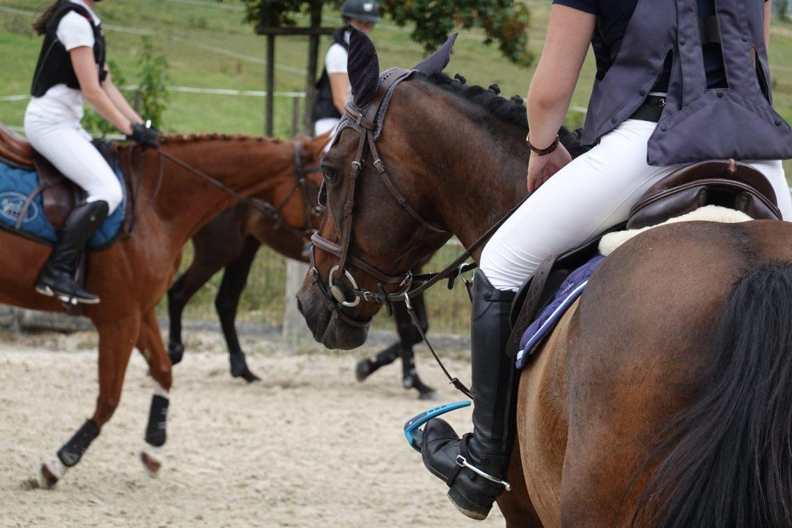 chevaux au paddock