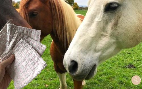 lingettes naturelles pour chevaux
