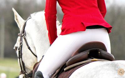 Look Équestre : Comment Assortir les Couleurs pour Mettre son Cheval en Valeur (et Éviter la Fashion Georgette) !
