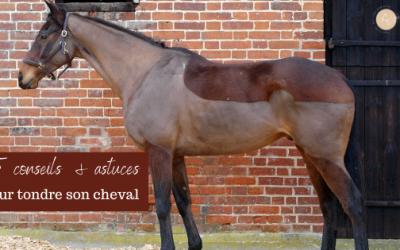 15 Conseils & Astuces pour Réussir la Tonte son Cheval