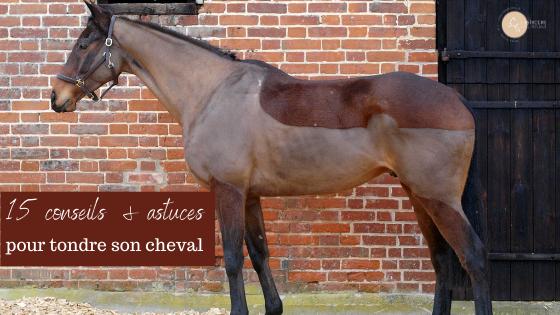 conseils pour tondre son cheval