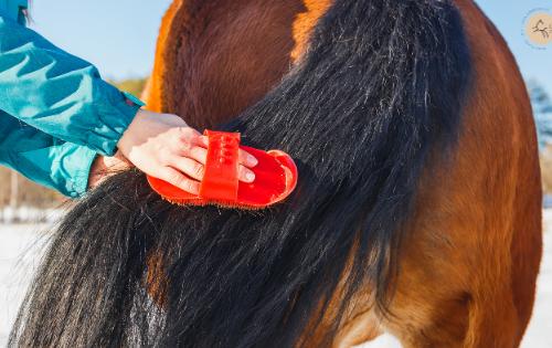 faire pousser crins cheval