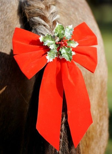 noel poney club bonnet noel poney deguisement noel poney pere noel poney noel equitation deguisement noel pour poney