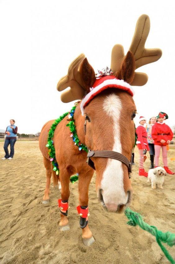 noel equitation christmas horse