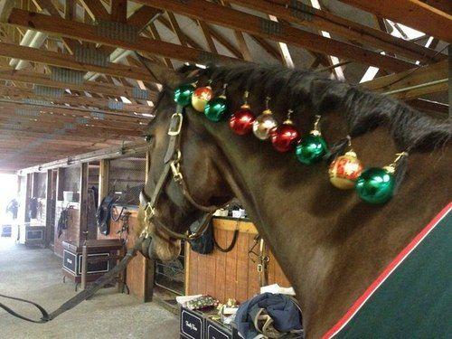 noel cheval photo cheval noel humour bonnet noel cheval pere noel a cheval chabraque noel cheval deguisement noel cheval