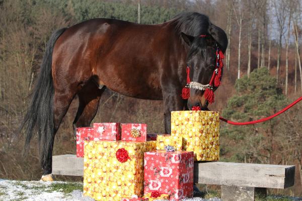 cadeau cheval personnalisé femme fille