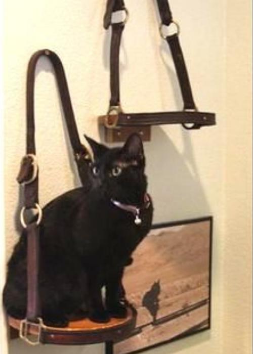 licol cassé chat