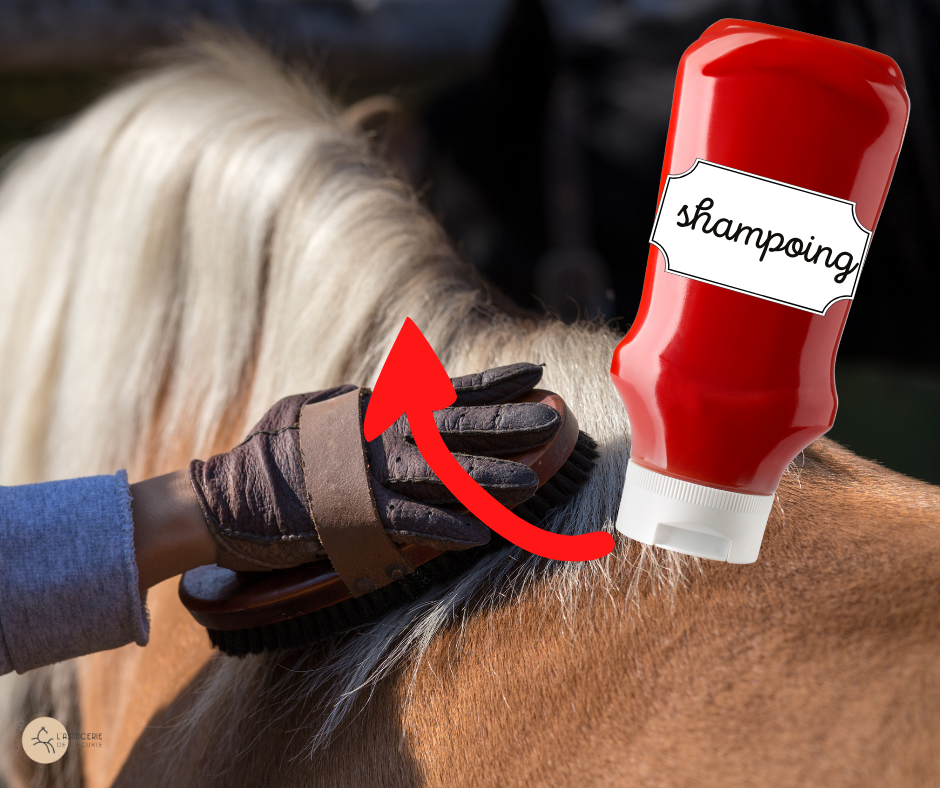 recycler bouteille ketchup pour les chevaux