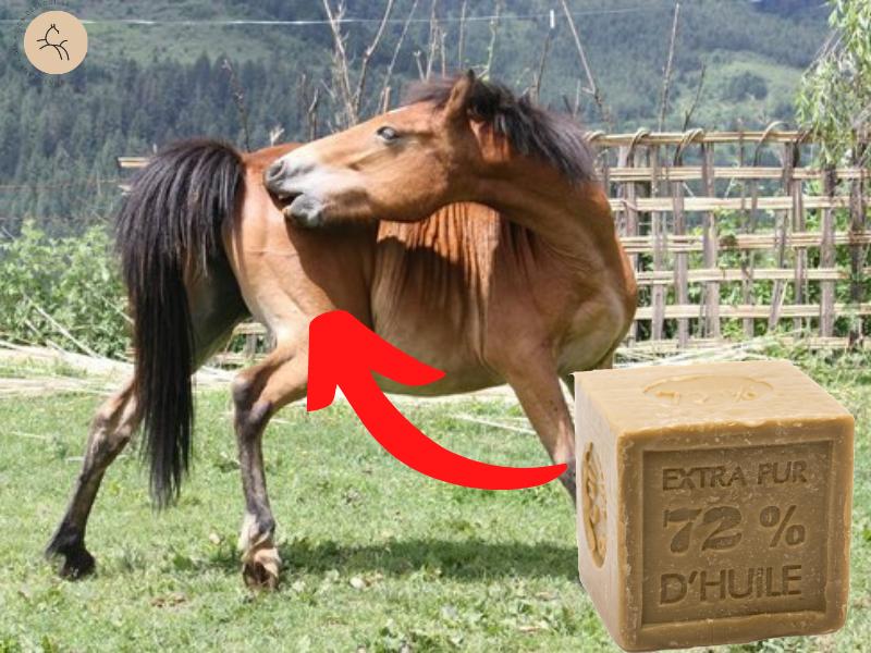 soulager démangeaisons cheval savon de  marseille