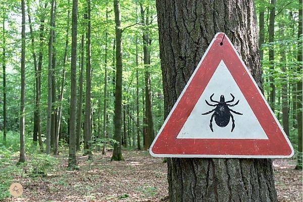 Panneau présence de tiques dans les bois