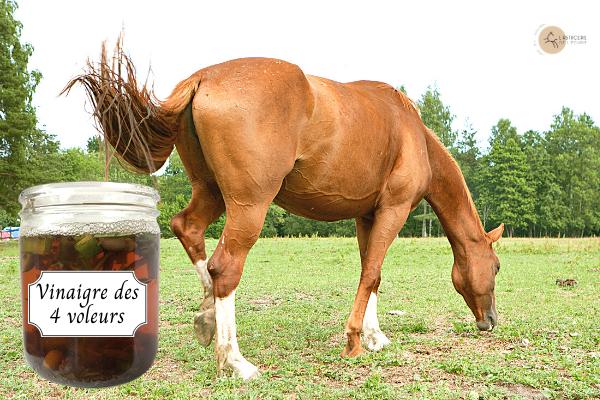 bocal de vinaigre des 4 voleurs avec un cheval