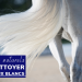 laver cheval blanc