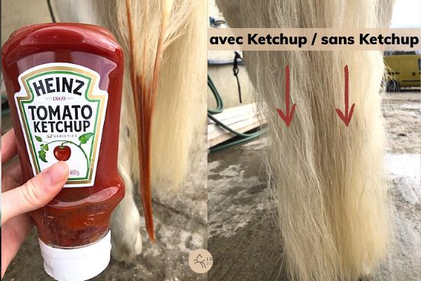 Déjaunir la queue blanche d'un cheval avec du ketchup