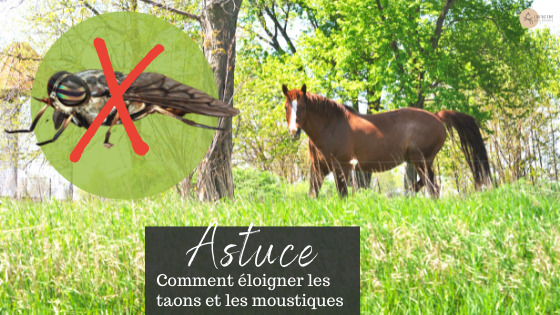 éloigner taons cheval