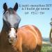 anti-mouches cheval recette DIY