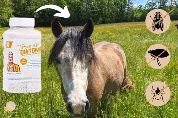 utilisations de la terre de diatomée sur le cheval et sa crinière