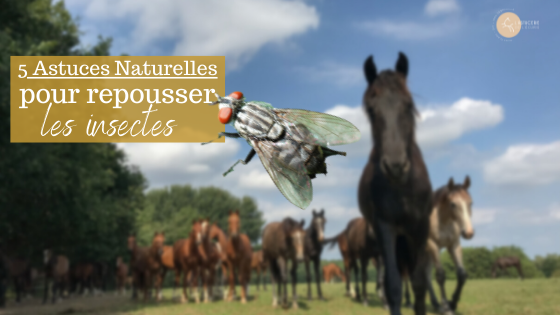5 trucs anti-insectes cheval