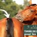 terre de diatomée pour les chevaux