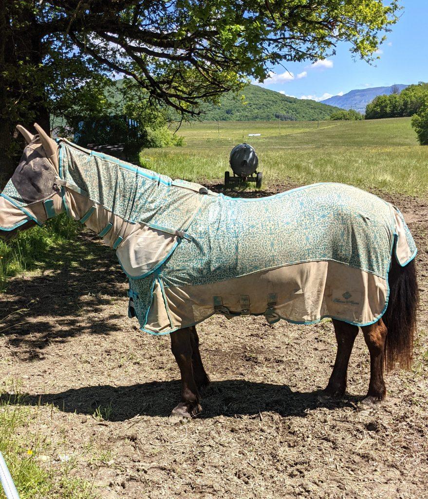 Couverture anti-dermite estivale du cheval