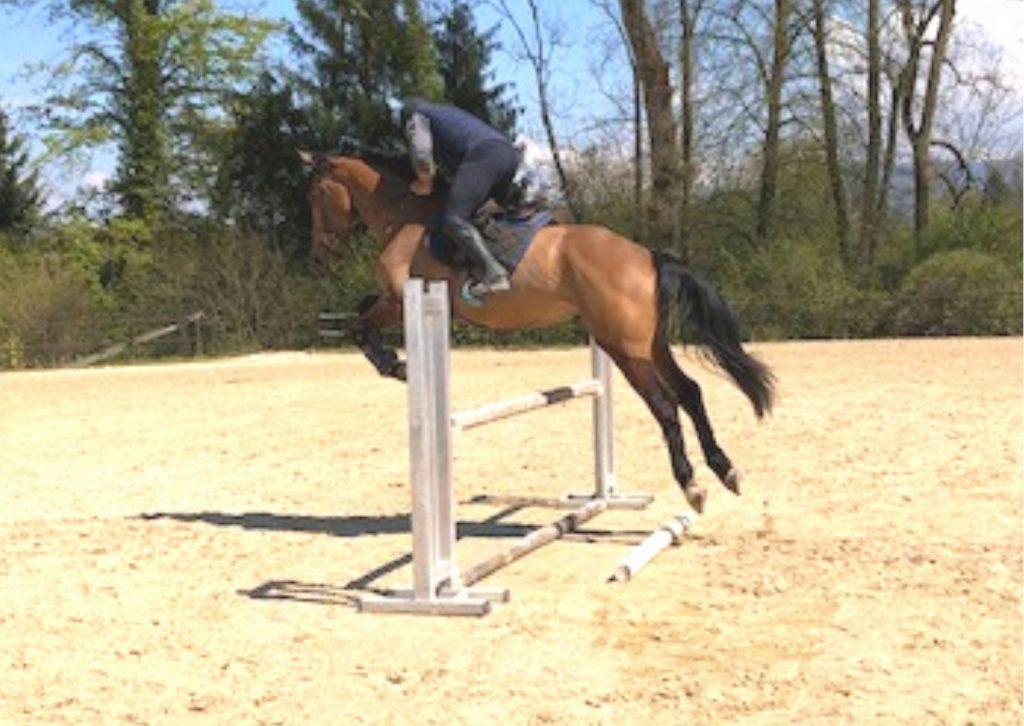 jeune cheval bai à l'obstacle