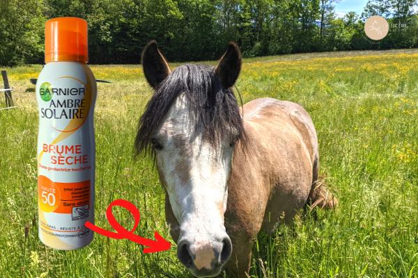 crème solaire pour nez cheval rose et fragile