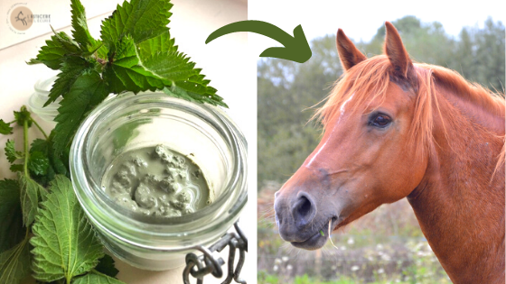 recette argile ortie cheval bienfaits